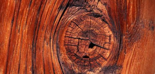 Сучки на древесине -фото