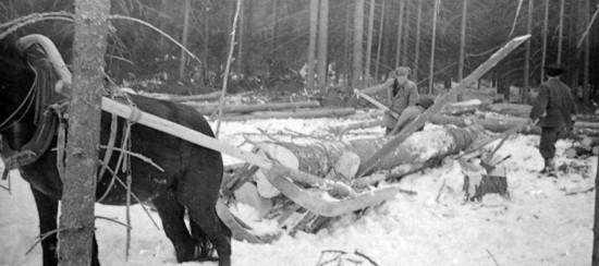 Вывоз бревен из леса зимой - фото