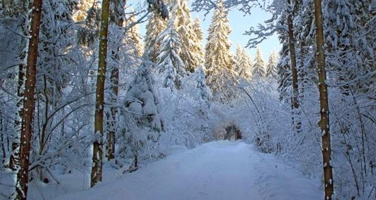 Зимняя дорога в делянку - фото