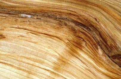 Дефекты древесины -фото