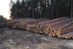 Зимний лес, на сколько он лучше летнего?